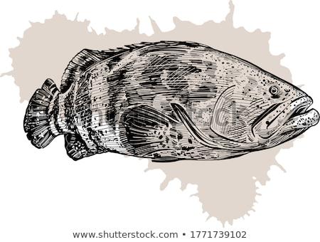 Grouper Stock photo © Laracca