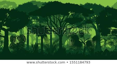 Rainforest drzewo drzew życia krajobrazy korzenie Zdjęcia stock © mikdam