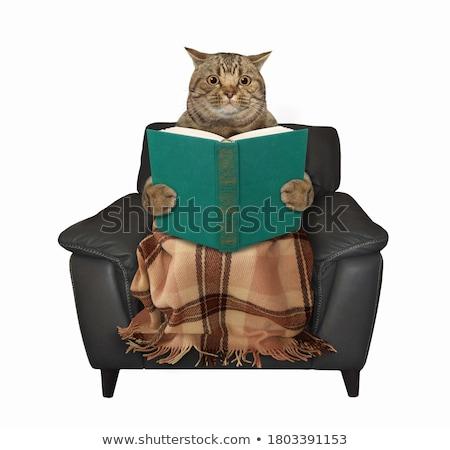 Nagy könyv fiatal lány keres valami nő Stock fotó © zastavkin
