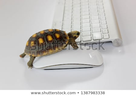 Slow connection and computer as a turtle Stock photo © zurijeta