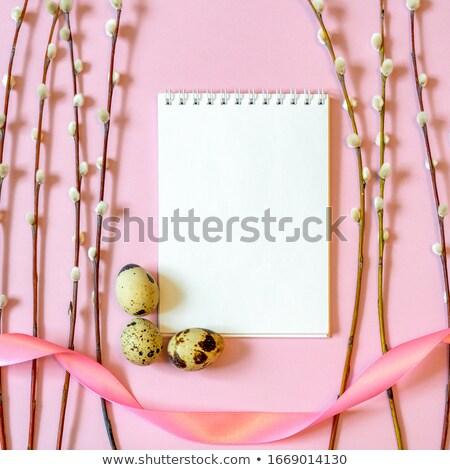 Easter catkin. Stock photo © Pietus