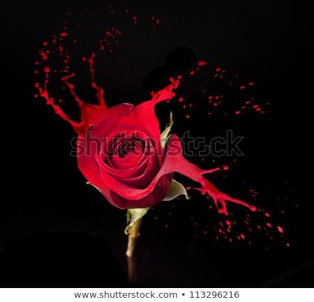 rózsa · csobbanások · piros · fekete · természet · szépség - stock fotó © zdenkam