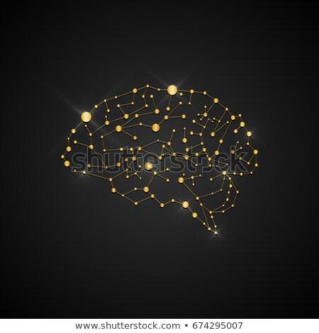 Cervello rendering 3d umani idea Smart Foto d'archivio © AlienCat