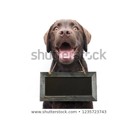 cute dog holding a blank sign stock photo © lightsource