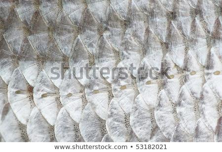魚 · 皮膚 · テクスチャ · 写真 · クローズアップ - ストックフォト © inxti