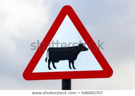 Jelzőtáblák figyelmeztetés veszély tehén felirat klasszikus Stock fotó © Livingwild