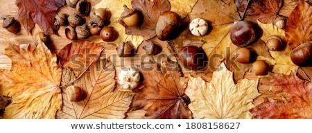 Autumn arrangement Stock photo © MKucova