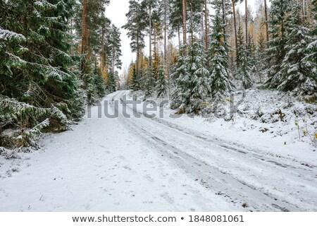 Gruntów drogowego zimą niebo drewna śniegu Zdjęcia stock © ryhor