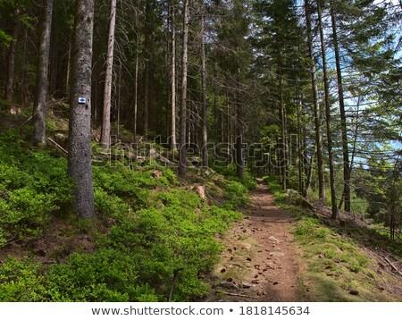 Orman iz işaretleri Almanya ağaç kırmızı Stok fotoğraf © Arrxxx