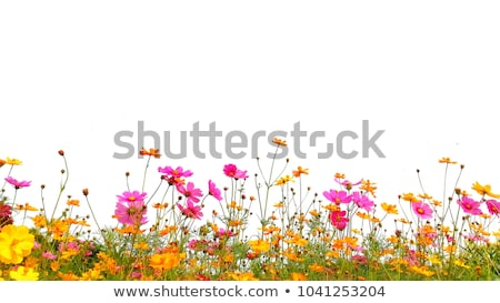 Beautiful Coloured Flowers on the White Background Stock photo © maxpro