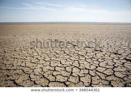 footprint on dry crack soil Stock photo © tungphoto