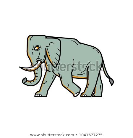 Afircan Elephant in bush Stock photo © wildnerdpix