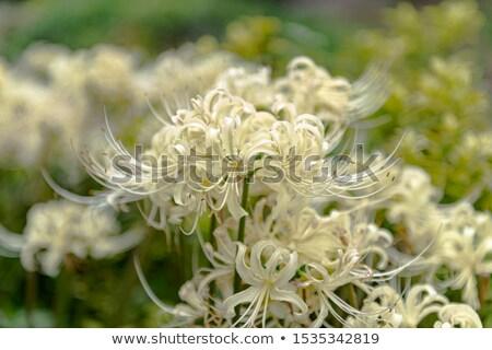 preto · e · branco · aranha · verde · natureza · floresta · jardim - foto stock © thp