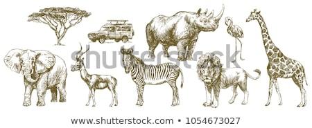 вектора · жираф · носорог · слон · Африка · дерево - Сток-фото © kali