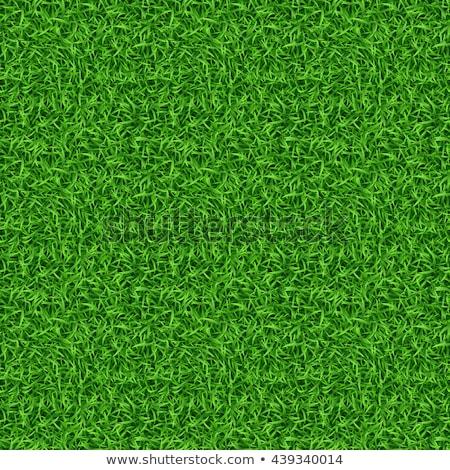 Groen gras naadloos vector Pasen ontwerp tuin Stockfoto © opicobello