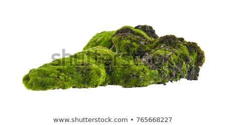 Rocha musgo coberto tcheco Suíça madeira Foto stock © ondrej83