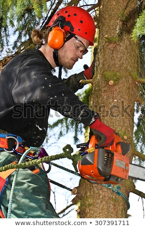 Woodcutter with chainsaw in action in denmark  Stock photo © jeancliclac