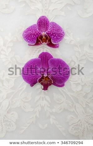 Orchidea rózsaszín szatén fehér lila lap Stock fotó © madelaide