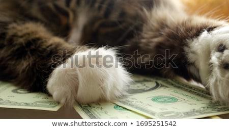 cat count money Stock photo © Mikko