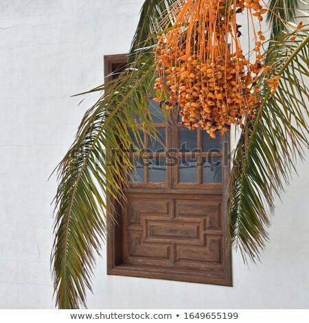 Palmera casa cielo azul cielo edificio pared Foto stock © Digifoodstock