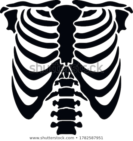Rib cage Stock photo © bluering