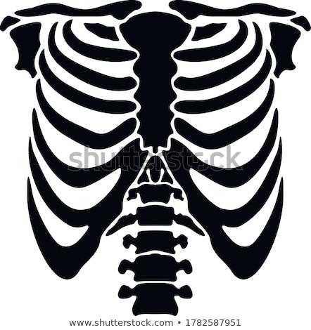 insan · iskelet · sayılar · açıklama · anatomik - stok fotoğraf © bluering