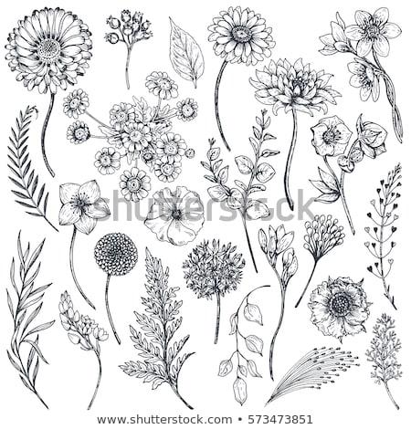 Hermosa dibujado a mano flores ramo vector elemento Foto stock © cosveta