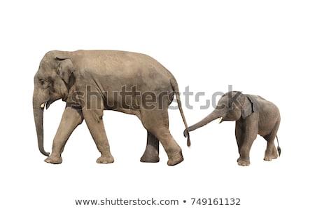 Stock fotó: Kettő · elefántok · sétál · park · Dél-Afrika · háttér