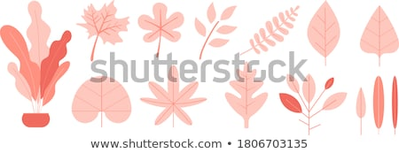 red leaf vector illustration in flat design stock photo © robuart