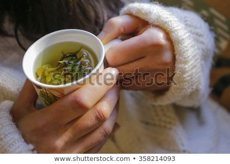 травяной мудрец травяной чай свежие листьев Сток-фото © drobacphoto