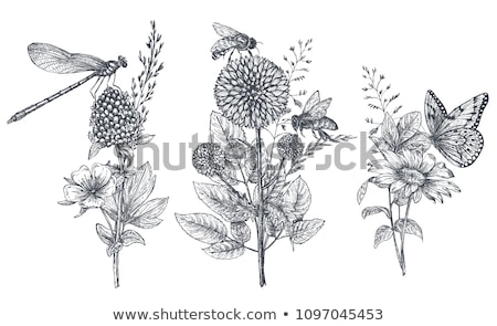 Butterfly and dragonfly in flower garden Stock photo © bluering