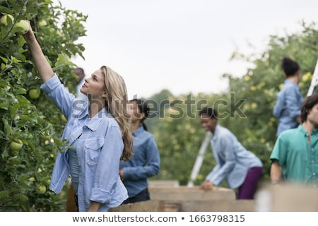 woman on ladder reaching for apple stock photo © is2