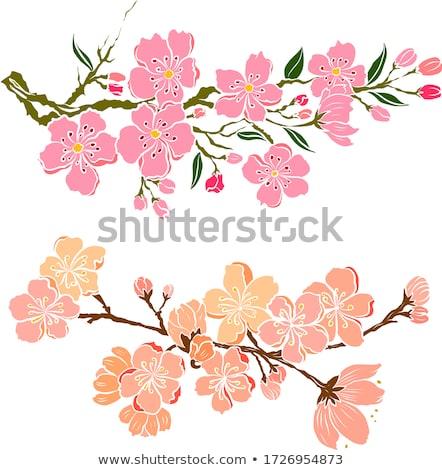 Вишневое персика Blossom цветы шаблон Cherry Blossom Сток-фото © Krisdog