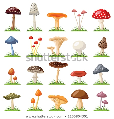 Família cogumelos terreno secar folhas folha Foto stock © simply