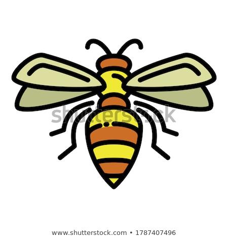 Voador vespa vetor ícone inseto abstrato Foto stock © blaskorizov