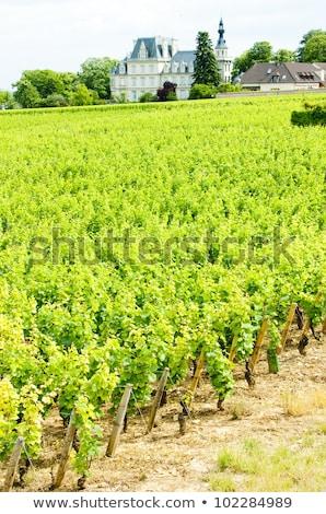 Vineyard in the Cote d'Or  Stock photo © Hofmeester