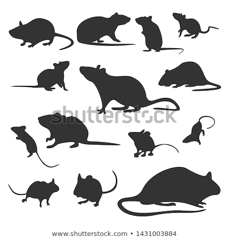 Silhouette of rat on a pink background Stock photo © Artspace