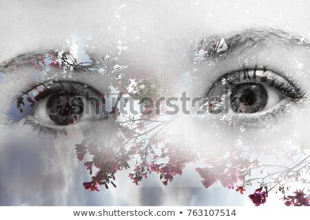 Stock photo: Fuchsia Blue Eyes on White