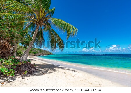 Grand Cayman Beach stock photo © mosnell