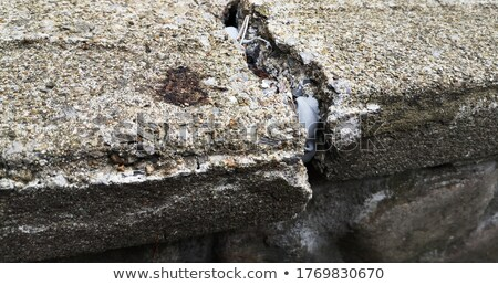 Mason shifting bricks Stock photo © photography33