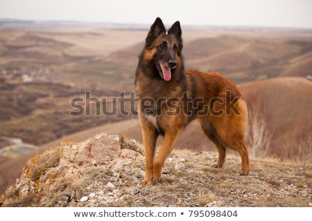 犬 · フロント · 表示 · 座って · 孤立した - ストックフォト © eriklam