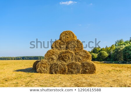 Straw ricks Stock photo © jakatics