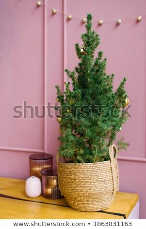 新しい · 緑 · バケット · 生活 · 小さな · スタジオ - ストックフォト © compuinfoto