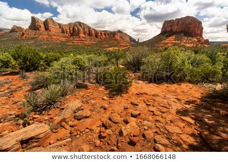arizona desert landscape red rocks with cactus stock photo © cboswell