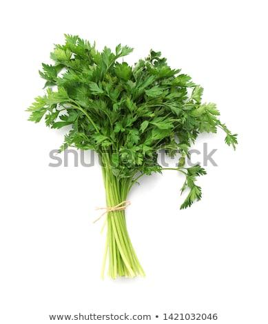петрушка · свежие · зеленый · изолированный · белый - Сток-фото © ozaiachin