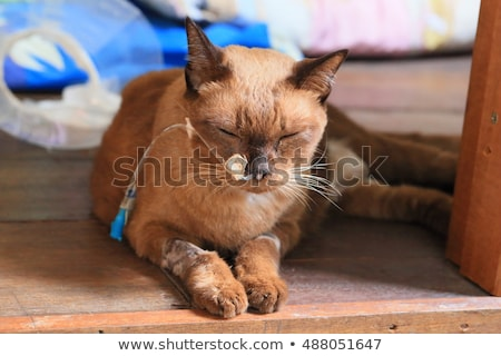 Ill cat with cone and tube Stock photo © Hofmeester