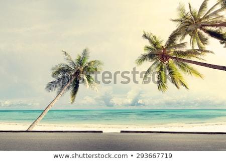 Sand road on a caribbean island Stock photo © Hofmeester