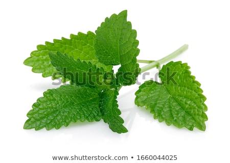 свежие зеленый ароматический мята лимона бальзам Сток-фото © juniart