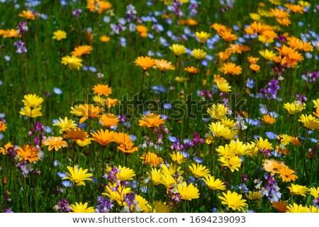 Kleurrijk bloemen straten Washington USA hemel Stockfoto © Frankljr