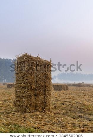 Tájkép széna mező aratás viharos égbolt Stock fotó © dariazu